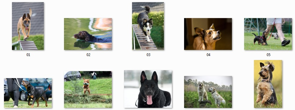 Pixel Studio FX 2.0 Bonus 12 - Royalty-Free Dog Photos